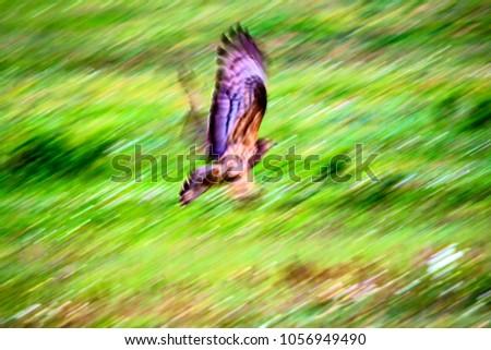 Flying bird. Motion blur background. #1056949490