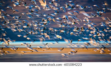 Flying birds. Abstract Motion Blur Background\n