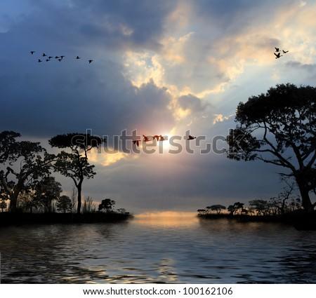 Birds Flying in The Sky Sunset Flying Birds in The Sky