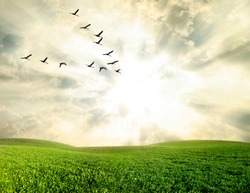 Flying birds over a green field at sunset