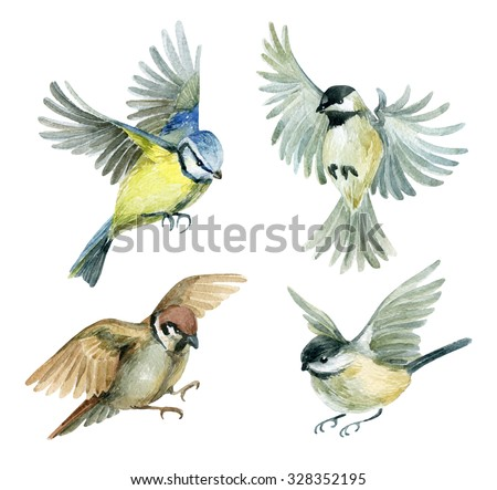 Flying birds set. Watercolor birds - sparrow, titmouse and chickadee. Hand painted illustration isolated on white background