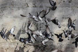 flying birds with mayhem