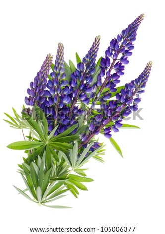 Flying blue isolated  bluebonnet summer flowers  with leaves concept
