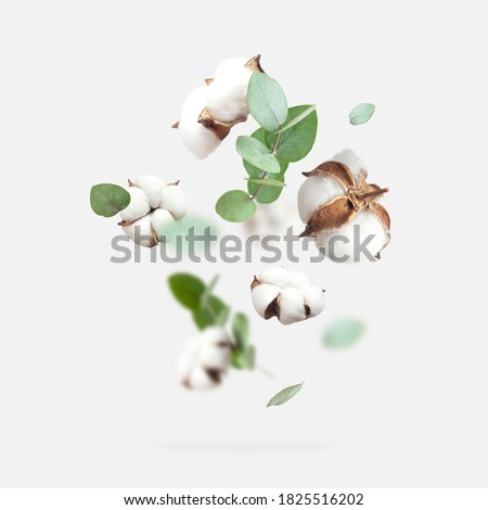 Flying cotton flowers, green twigs of eucalyptus on light gray background. Creative Floral background with cotton, delicate flowers of fluffy cotton. Flat lay flowers composition, greeting card