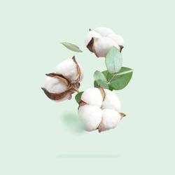 Flying cotton flowers, green twigs of eucalyptus on mint green background. Creative Floral background with cotton, delicate flowers of fluffy cotton. Flat lay flowers composition, greeting card