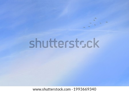 Flying crane birds in the blue sky with clouds.