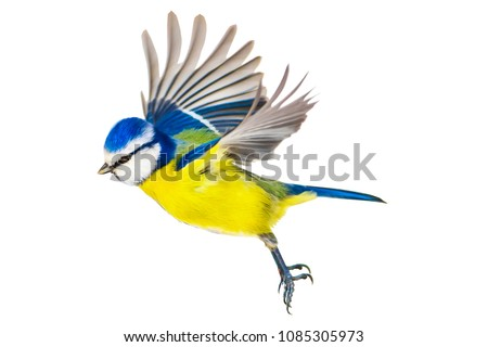 Flying cute bird. Isolated bird. White background.  #1085305973