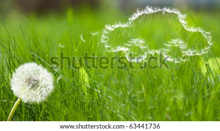 Flying dandelion's seed in form of a car pattern on green grass background - stock photo