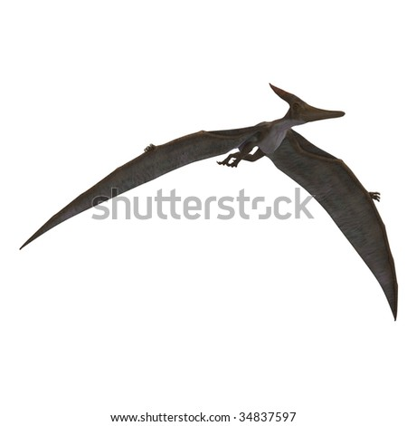 flying dinosuar Pteranodon. 3D render with clipping path and shadow over white