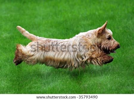 Flying dog #35793490
