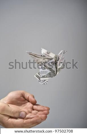 Flying dollar bird