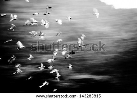 flying dove group blur motion
