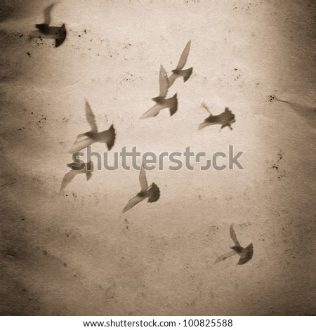 flying dove group old grunge paper texture background
