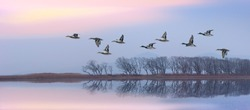 Flying ducks against an evening landscape