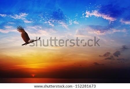 Flying eagle on beautiful sunset sky background - Bird of prey - Brahminy Kite