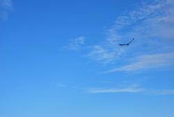 flying eagle on the blue sky