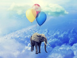 Flying Elephant concept. Image of Elephant attached to three balloons flying through a cloudy blue sky.  Flat style. Artistic design, raster illustration, photo manipulation