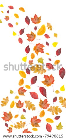flying fall leaves, isolated on white background