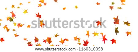 flying fall leaves on white background