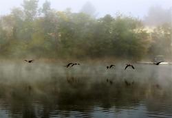 Flying Geese over Deep Creek Lake