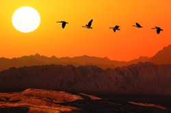 Flying geese over mountain on the orange sunset background