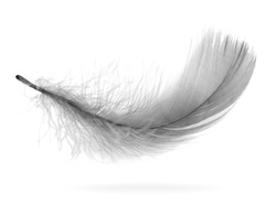 Flying gray feather with shadow