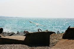 Flying Gull above Stony Beach Blocks at Ocean Bay Copy Space. Fly Seagull Bird, Urban Seashore Landscape and Clear Blue Sky Background. Coastline Harbor Nature Horizontal Photography