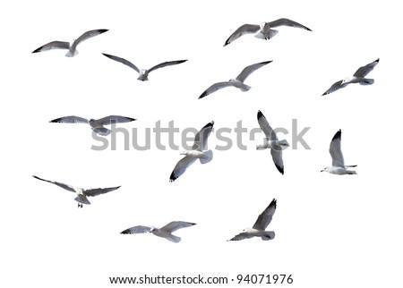 Flying Gulls isolated on white background