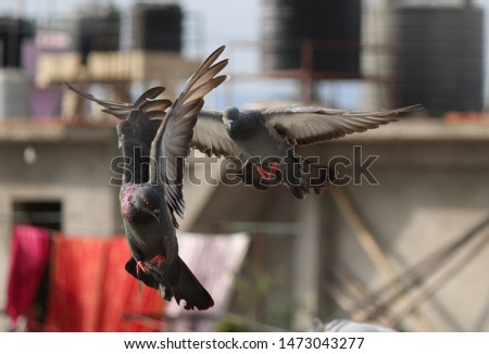 flying high pigeon together uniting  #1473043277