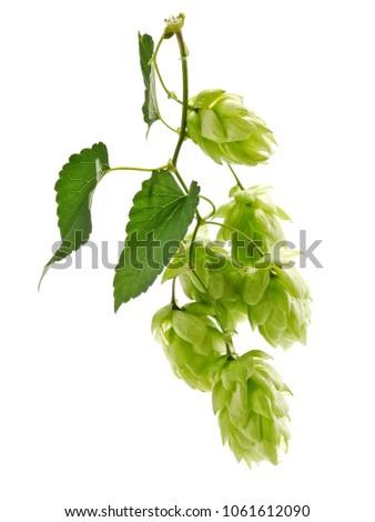 Flying hops twig