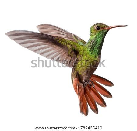 flying hummingbird isolated on white background Stock photo ©