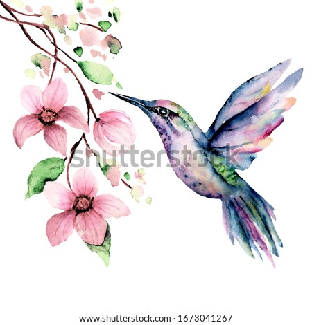 Flying hummingbird, watercolor illustration, tropical bird and flower isolated on white background, exotic, wild life clip art. Hand painting. Stock photo ©
