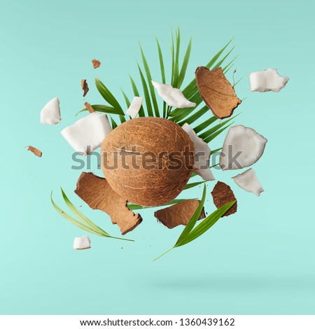 Flying in air fresh ripe whole and cracked coconut with palm leaves isolated on turquoise background. High resolution image, 3d concept Foto stock ©