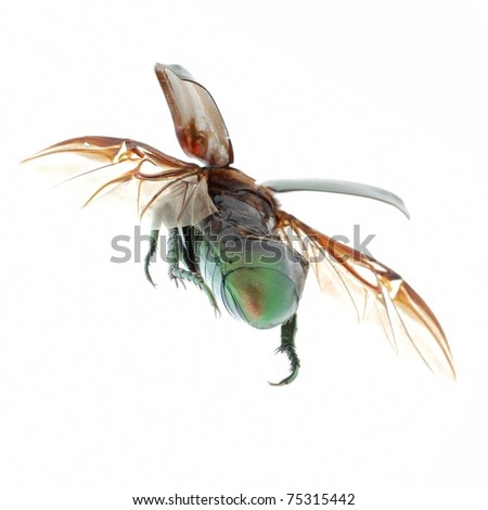 flying insect beetle
