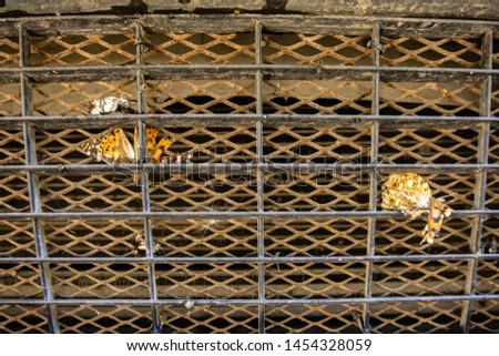 Flying insects on protective grille cooling radiator. Close-up of butterflies. Selective focus. Protective grille in front of a car engine cooling radiator.  Place for text. #1454328059