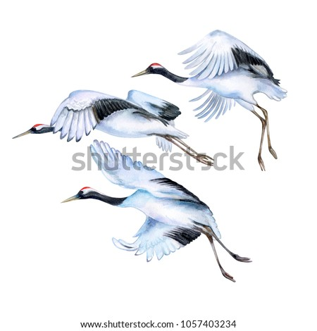 flying japanese cranes isolated ...
