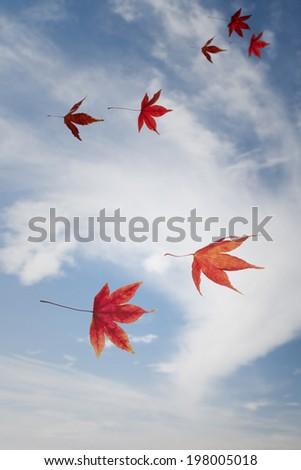 Flying leafs as birds.