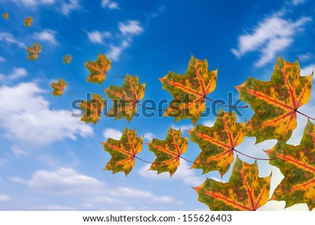flying leaves on cloudy sky in autumn