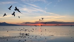 Flying of hundreds seagulls over Aegean sea