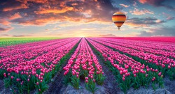 Flying on the balloon over the field of blooming hyacinth flowers. Colorful spring sunrise in the countryside. Artistic style post processed photo. Creative collage.