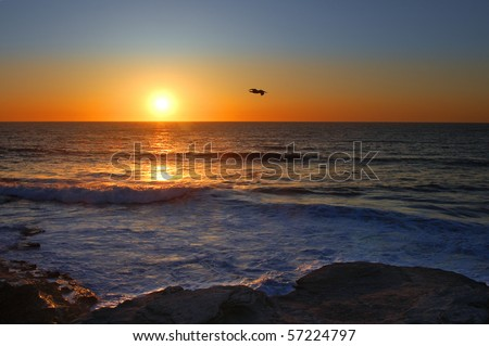 Flying pelican against setting sun; La Jolla, California