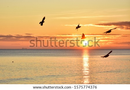 flying pigeons on sunrise background during sunrise over the baltic sea in gdynia poland