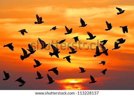 Flying pigeons on the sunset background