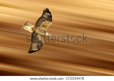 Shutterstock Flying Predator. Isolated on yellow red background Detailed, sharp and high resolution