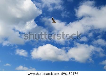 Flying seagull. #696152179