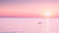Flying Seagull at sunrise on sea on the background of a peaceful sea and rising sun.