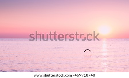 Flying Seagull at sunrise on sea on the background of a peaceful sea and rising sun. #469918748