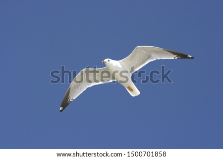 Flying seagull flying free against bright blue sky. #1500701858