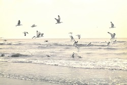 Flying seagulls at the beach. Sundown or time after the sunset with open sea and flying gulls. Tranquil scene. Toned image.