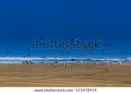 Flying seagulls on the beach at the ocean waves